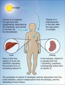 Vitamin D3 Production in Our Bodies
