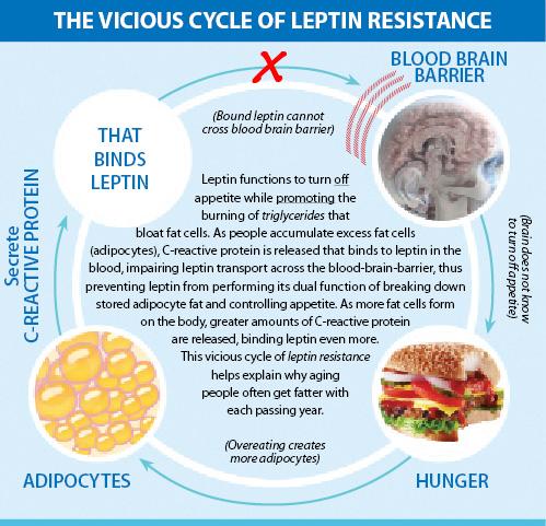 leptin-resistance